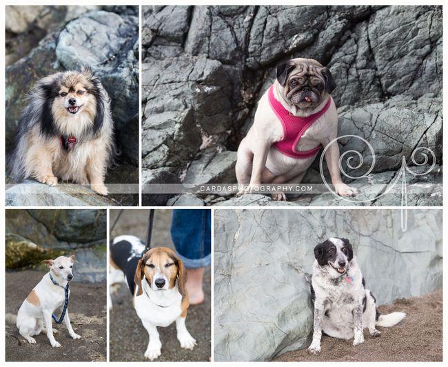 Bandon beach dog photo 003